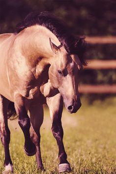 Source: equestrian-endeavors