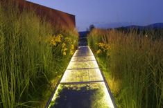 walkway above and thru the grasses