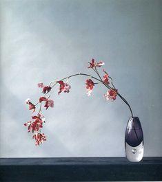 根元の透明感ある花器が たわんだ欄の内に秘めた 生命力を支えている。
