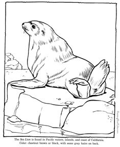 Sea Lion coloring pages - Zoo animals