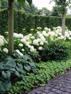 Hydrangea Landscaping, Landscaping Trees, Farmhouse Landscaping, Outdoor Landscaping, Front Yard Landscaping, House Landscape, Garden Landscape Design, Planter Hortensia, Back Gardens