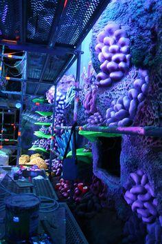 Disney Finding Nemo - France
