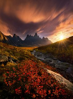 Blazing Autumn colors in the Far North, Yukon, Canada. Some of the highest peaks…