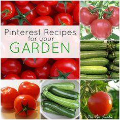 Pinterest recipes for your garden - recipes using tomatoes and zucchini