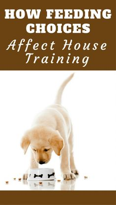 Dog Obedience Training What you feed and how you feed your puppy has a massive influence on the house training process. This article will help you make the right decisions. Training Your Puppy, Training Tips, Potty Training, Dog Pee, Puppy Care, Pet Care, Aggressive Dog, Dog Behavior, Labrador Puppies