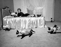 @vintagelovrr Instagram: «Kim Novak, 1958»