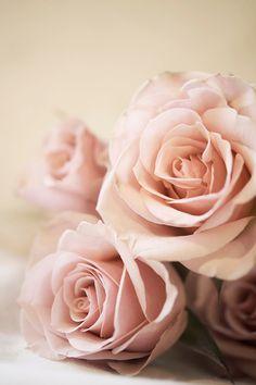 Blushing Signed Print,  Pink Roses Photo; Shabby Chic Decor $25.00