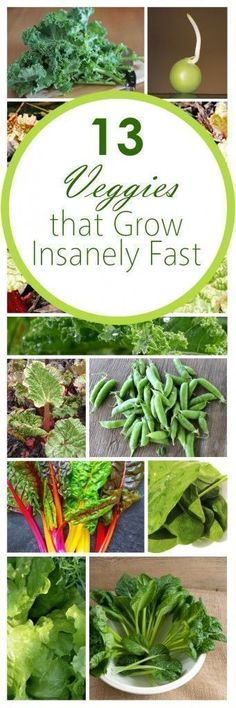 Fast growing veggies, fall gardening, fall gardening hacks, popular pin, vegetable gardening, gardening tips, gardening tips and tricks. #gardeningvegetable #GardenLandscapingTrees #vegetablegardening