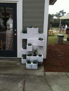 Concrete blocks, succulents...