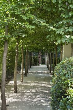 Tree Alle'e jacques wirtz et charles zana architecte / hôtel particulier st-james Japanese Garden Backyard, Love Garden, Garden Pool, Garden Paths, Shade Garden, Garden Landscaping, Landscape Architecture, Landscape Design, Garden Design
