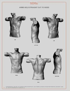 11 best Man anatomy images on Pinterest | Anatomy reference, Human ...