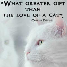 #catquotes #catquote #crueltyfreeblogusa #catlovers #catloversclub #catloversworld Cat Love Quotes, Great Gifts, Cats, Animals, Gatos, Animales, Animaux, Animal, Cat