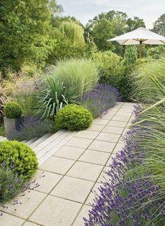 30 Best Front Yard And Backyard Landscaping Ideas on A Budget 30 besten Vorgarten und Hinterhof Landschaftsbau Ideen mit kleinem Budget Lavender Garden, Lush Garden, Dream Garden, Planting Lavender, Garden Care, Lavender Hedge, Growing Lavender, Purple Garden, Garden Pool