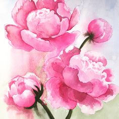 undefined Watercolor Paintings, Rose, Flowers, Plants, Inspiration, Biblical Inspiration, Pink, Water Colors, Plant