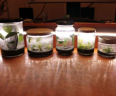 """Hi,today I noticed the """"mason jar contest"""" and thought it would be the right time to finally publish an Instructable for my """"pico aquariums"""". I´ve been experimenting on those for some time now (years to be exact) and always thought to myself; """"Damn, this works so well and is so simple, you have to make an `ible for this, parents and kids will love it..."""".So here it is,The guide to an (almost) maintenance free Pico-Aquarium in a mason jar with living plants..."""