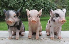 3 Cute Little Pigs Sitting