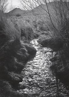 1938 Creek, Tungsten Hills, Owens Valley, California [backlighted stream through finely textured trees, low mountains in distance] by Ansel Adams Sierra Nevada, Famous Photographers, Landscape Photographers, Creative Photography, Fine Art Photography, Ansel Adams Photos, Ansel Adams Photography, Different Points Of View, Black White Art