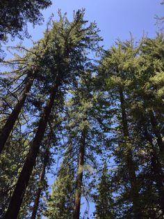 Yosemite Yosemite National Park, National Parks, Glacier Park, Natural World, Trail, Hiking, California, Nature, Plants