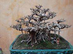 Bonsai Ficus, Bonsai Art, Landscapes, Plants, Room, Paisajes, Bedroom, Scenery, Rooms