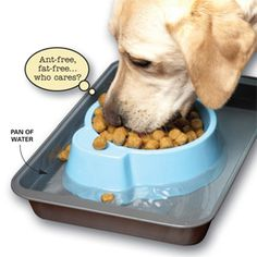 How to keep ants out of pet food with no chemicals pet food ant 17 best tips for pet care and pet safety ccuart Images