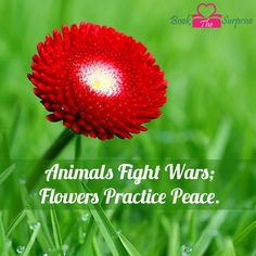 Animals fight wars; #flowers practice peace.#nature #garden #pary #gift #bookthesurprise