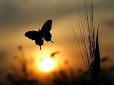 Buongiorno Buongiorno :): Prendere e partire in libertà.