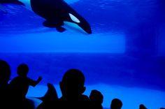SeaWorld Threatens Whistleblower, Then Denies Threat