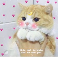 Épinglé par auni sofea sur auni cute cat memes, funny cats e Cute Cat Memes, Cute Love Memes, Dog Memes, Funny Cats, Cute Kittens, Cats And Kittens, Cute Baby Animals, Funny Animals, Gatos Cool