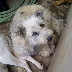 I was rescued from the Dog Meat Trade... Please tell people about the terrible death I was going to have..If you know of someone who would love to adopt them... just send a message to cindy@soidog.org