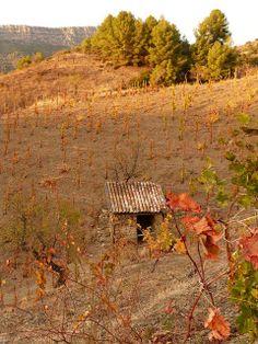 Viñas del Priorat en Otoño | Catalonia