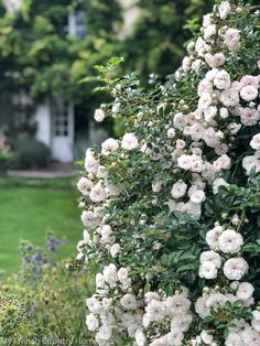 The garden parterres are now in their third summer and I thought the gardeners among you may like an update. The weeping roses (White Dorothy). French Country Interiors, My French Country Home, French Cottage, French Country Decorating, Formal Gardens, Outdoor Gardens, Country Landscaping, Landscaping Ideas, Garden Landscaping
