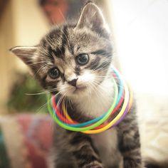 Little kitty, sad kitty, little ball of fur ..