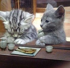Two kittys walk into a sushi bar.