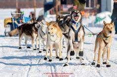 Photo – Iditarod