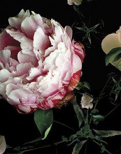 Lisa Creagh | The Instant Garden