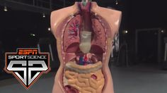 The Science Behind Competitive Eating | Sport Science | ESPN Archives - USANEWS.CA