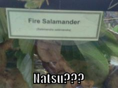 They Couldn't Possibly Contain You in There! <<<DUDE! I've wanted a lizard (even though salamanders are amphibians), but now I want this!!!! I'd so name it Natsu! I might just call it 'Nat' though.