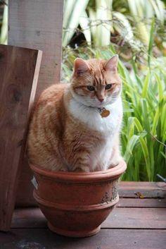 25 Hilarious Cat-Plants You Definitely Shouldn't Water. I Love Cats, Crazy Cats, Cute Cats, Funny Cats, Diy Cat Enclosure, Buy A Kitten, Cat Site, Cat Plants, Owning A Cat