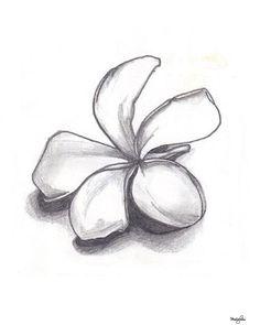 Seul Plumeria crayon dessin beaux-arts fleur délicate par GreenBomb