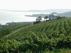 Badacsony Wine Region + Balaton Lake.