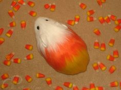 Little Candy Corn Guinea Pig