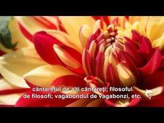 GÂNDURILE VĂ CIZELEAZĂ ÎNFĂȚIȘAREA! - YouTube Spirit, Youtube, Youtubers, Youtube Movies