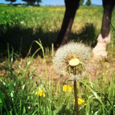 #klein und doch #auffällig #sonnenblumen sind so toll