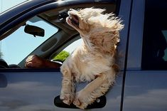 Adorable Dogs in Car Windows Pictures
