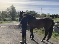 I've Bought a Horse!! - In Due Horse Buy A Horse, Still Waiting, French Lessons, Very Excited, 4 Year Olds, Equestrian, The Past, Journey, Horses