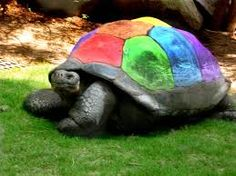 Image result for turtle pictures