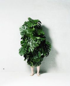 Makoto Azuma - Leaf Man // Link: http://azumamakoto.com/?p=976 // AMKK is a company developing the experimental creation by Makoto Azuma, a flower artist, whose subject is flowers and plants. The activities of AMKK aim to increase the existential value of plants by finding out the most mysterious figure only owned by flowers and plants and converting it to the artistic expression.