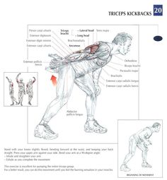 Triceps Kickbacks ♦ #health #fitness #exercises #diagrams #body #muscles #gym #bodybuilding #arms