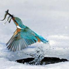 Bird - Pixdaus