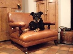 The perfect antique leather dog chair ?